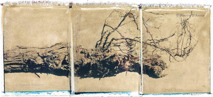 Ceppo con radice, mese di febbraio, 2006