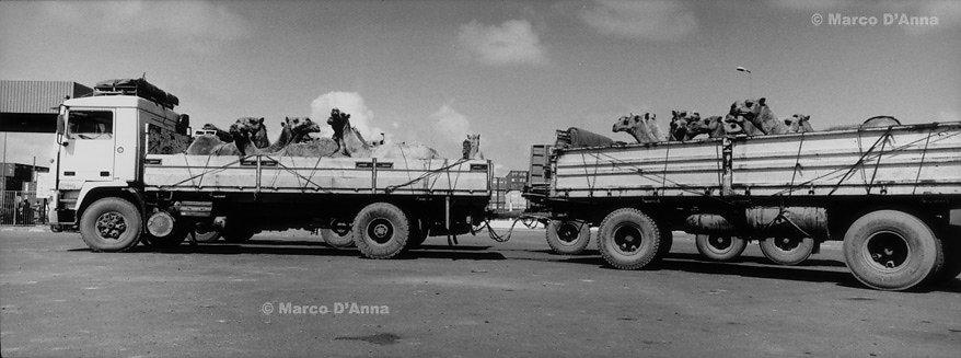 Djibouti, 2006