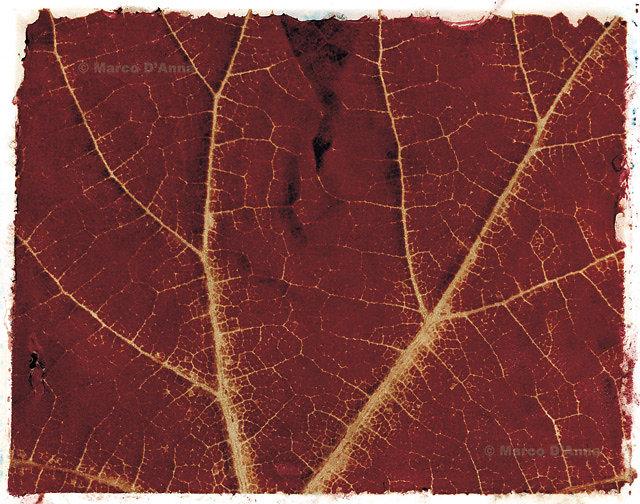 Nervature, mese di ottobre, 2005