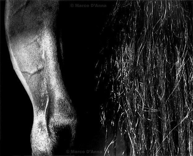 Crini di cavallo, calendario